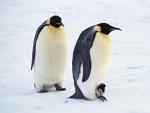 В Антарктиде обнаружили сотни мумий вымерших пингвинов