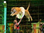 В Сеть попало видео, как цирковую лошадь напали хищники