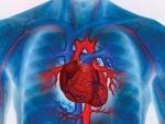 Медики назвали 5 привычек, которые губят сердце
