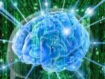 Ученые показали движение мысли