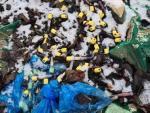 Возле Львова обнаружена несанкционированная свалка медицинских отходов