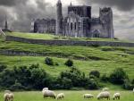 В болоте в Ирландии обнаружили языческого идола возрастом около 1600 лет