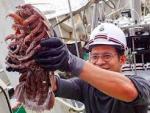 У берегов Явы поймали подводного таракана размером с кота