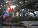 Туристы обнаружили в лесу «портал в иное измерение»