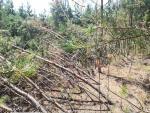 В лесу Самарской области обнаружили аномальное место