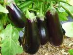 Ученые назвали овощ от всех бед