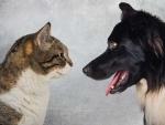 Ученый рассказал, кто умнее: собака или кошка