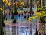 Жители Вирджинии наткнулись на удивительное радужное болото