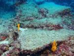 У брегов Турции обнаружили самый старый затонувший в мире корабль