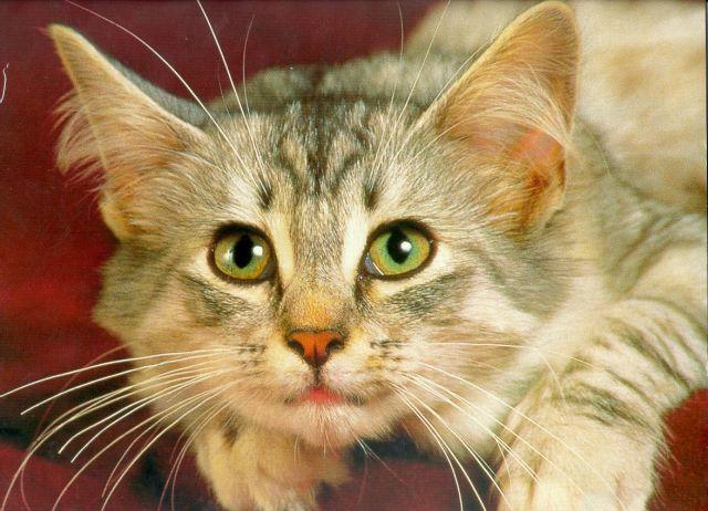 от аллергии на кошек какое лучшее
