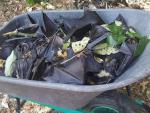 В Австралии на лету замертво падают летучие мыши из-за аномальной жары
