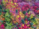В Юте обнаружили аномальный разноцветный лес