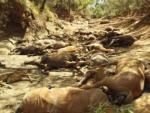 В Австралии от аномальной жары массово гибнут дикие животные