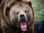На севере Канады медведь растерзал женщину с ребенком