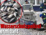 К берегам Германии прибило тысячи обезглавленных выпотрошенных рыб