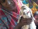 В Индии родилась коза-циклоп