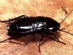 Американец, пытаясь убить таракана, прострелил себе ногу