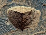 На Марсе обнаружили рукотворную пирамиду