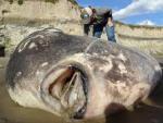 Огромную рыбу-луну нашли на берегу Калифорнии: грядет землетрясение в Тихом океане