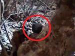 В российском лесу засняли неизвестное существо
