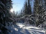 Трёхлетний мальчик смог сам выбраться из тайги в 35-градусный мороз