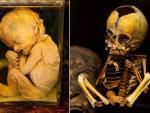 Британец продает в своем магазине детские скелеты и засушенные человеческие внутренности