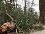 От мощного урагана в США погибло 227-летнее дерево, посаженное Джорджем Вашингтоном