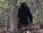 В лесу Мэриленда видели мутанта-минотавра