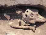 На острове в Ла-Манше обнаружили странную могилу кита