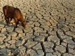 Ученые: Землю ожидают катастрофические засухи